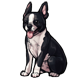collectable_bostonterrier.png