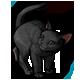 fauna_blackcat.png