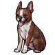 fauna_chocolatebostonterrier.png