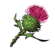 magic_thistle.png