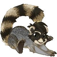 maki_raccoon.png