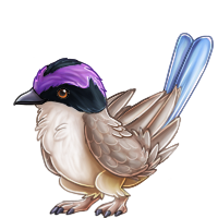 reve_purple-crownedfairy-wren.png
